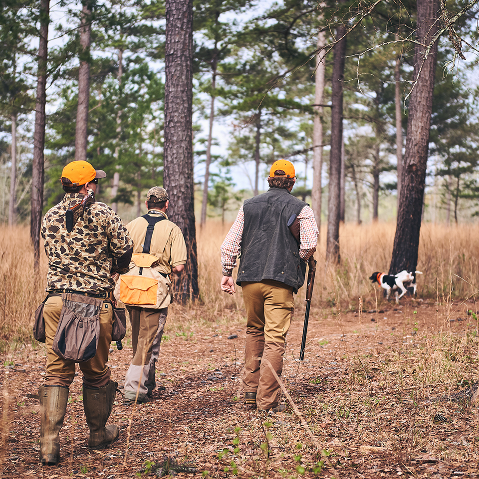 Signature Expedition | Georgia Quail Hunt - Fall 2019