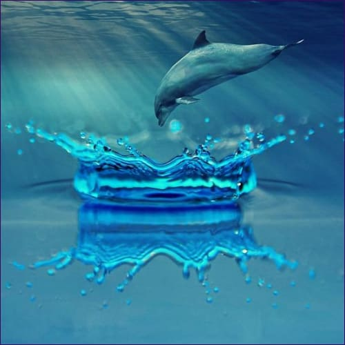 Dolphin Animal Meditation Empowerment