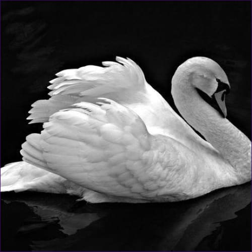 Dream Voyage of The Swan Attunement