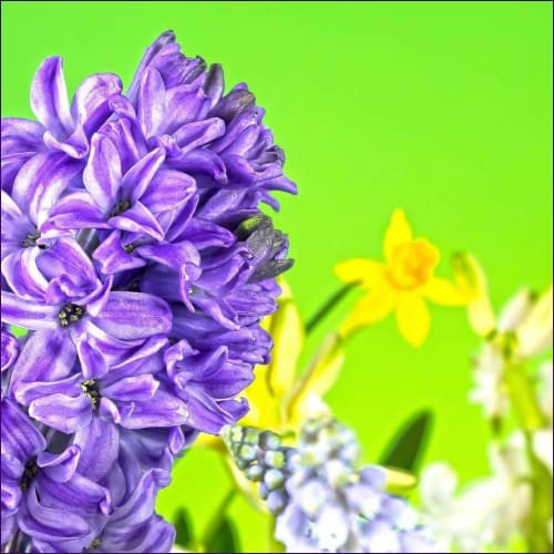 Hyacinth Psychic Clearing & Healing Empowerment