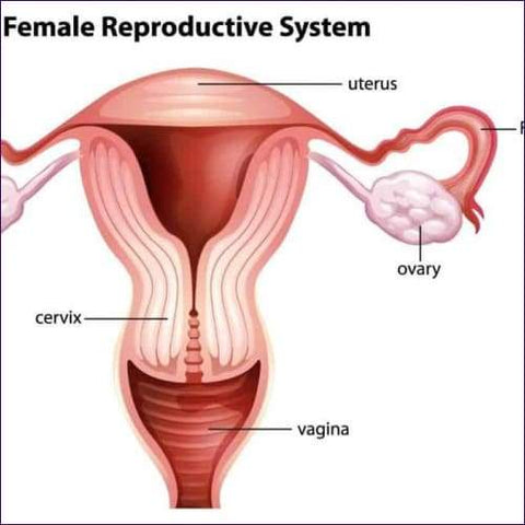 Womb Care Reiki Energy System