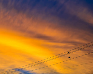 Sneakers on a Power Line at Sunset Print | Tyler Thomason Photography