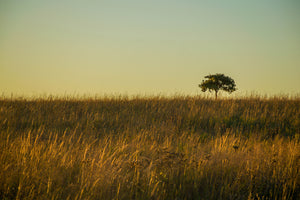 Alone on the Tallgrass Prairie Preserve | Tyler Thomason Photography