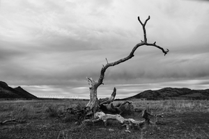 Broken Limb Wichita Mountains Photo Print | Tyler Thomason Photography