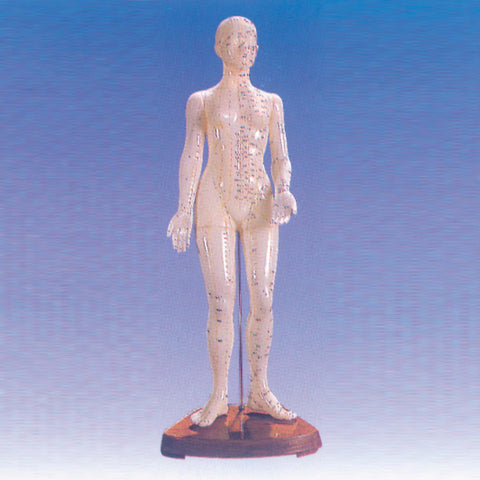 Human Body Model of Female Showing Acupoints<br>女性人体穴位模型<br>NvXingRenTiXueWeiMoXing