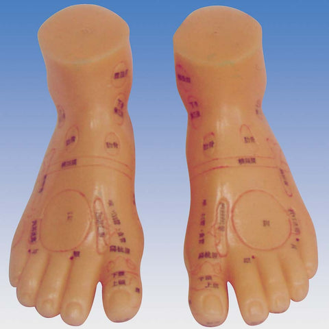 Massage Foot Model<br>按摩足模型<br>AnMoZuMoXing
