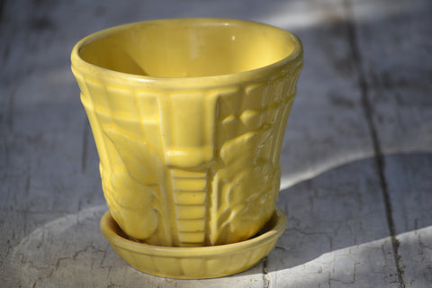 large yellow violet pot
