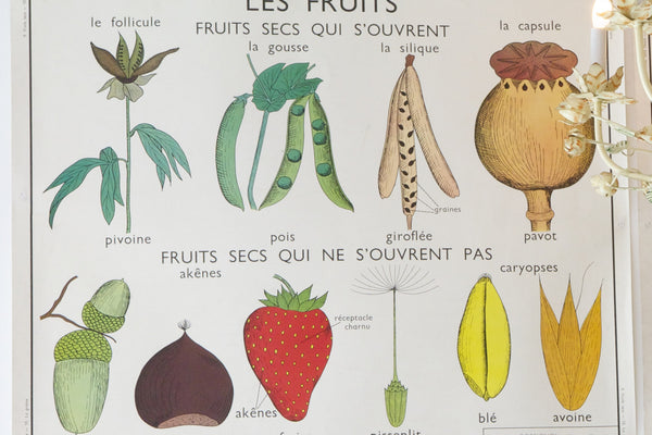 french school poster/fruit