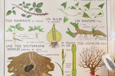 french school poster/roots