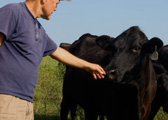 Dale touching cow