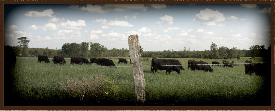 NC grassfed beef and pastured heritage pork