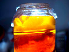 Kombucha tea brewing in a jar at home.