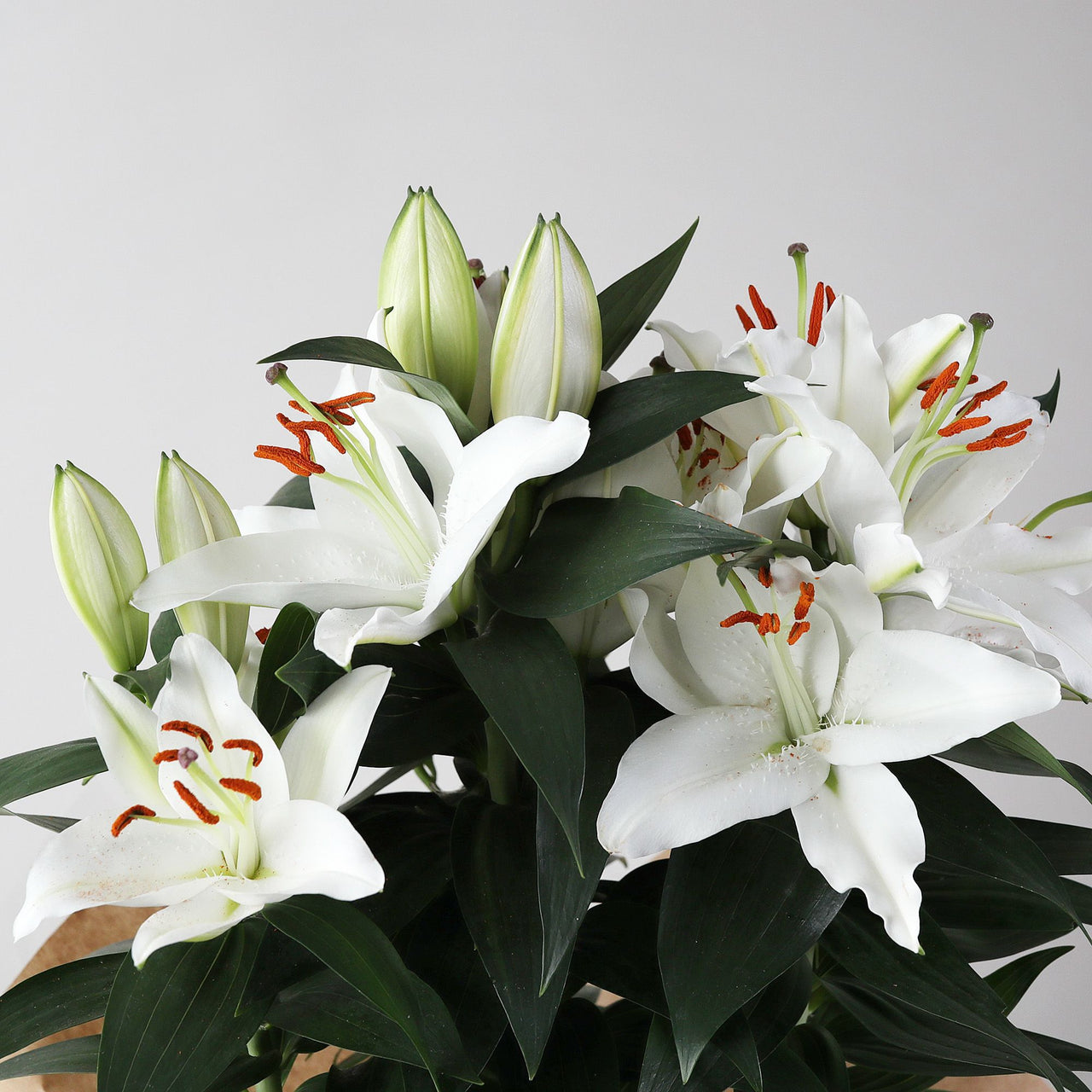 Gift Wrapped White Lily Plant