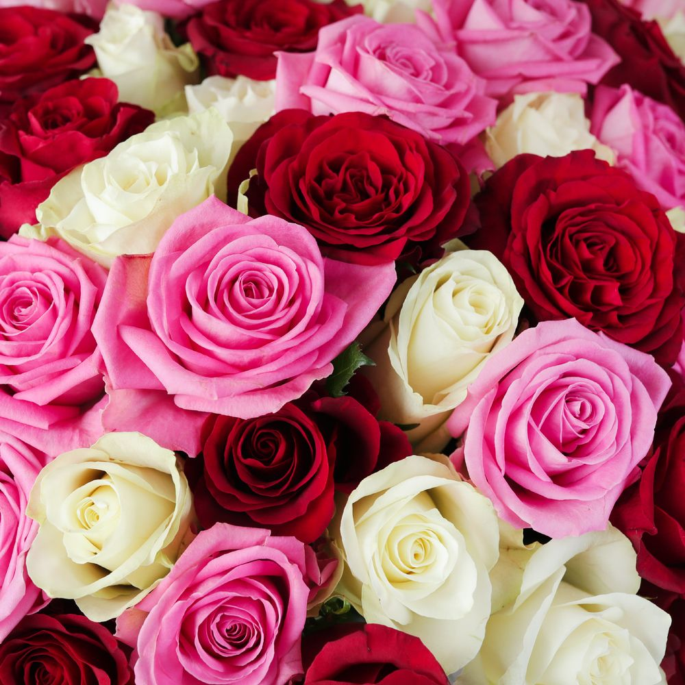 Mass of Mixed Roses