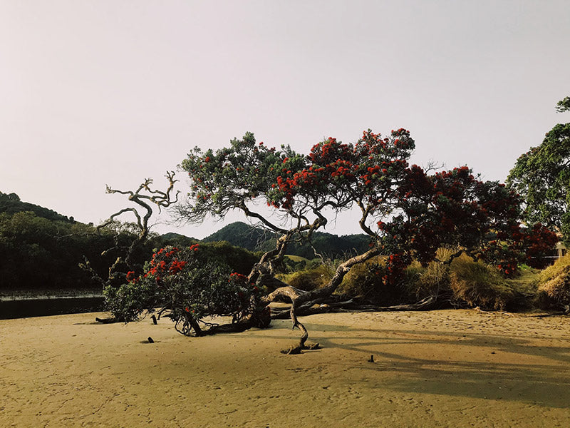 photo of a tree with red flowers on a barren field facing a mountain