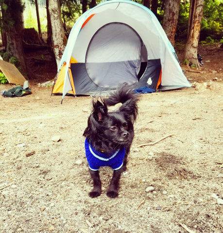 Camping Trip with Your Dog and Other Fun Summer Ideas
