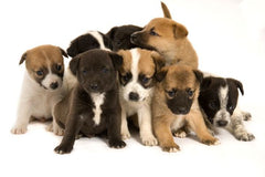 Best Puppy Training Advice To Prevent Anxiety