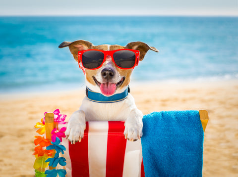 5 Summer Adventures To Do With Your Dog This Summer!