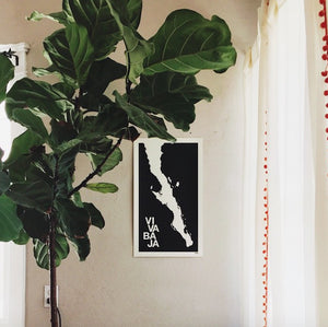 Fiddle Leaf Fig Tree Styling