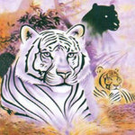 Fleece 50x60 Throw Blanket 3 Big Cats Tiger and Panther 606