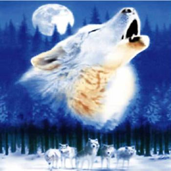Fleece 50x60 Throw Blanket Wolf 506