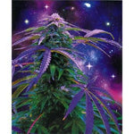 Blanket Queen Nu Trendz Signature Select - Leaf Ct- Cosmic Weed Leaf