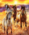 Blanket Queen  Signature Select JQ Sunrise Beauties Horse