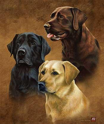 Blanket Queen JQ Signature- Wolf Ct- NH Labradors G2415