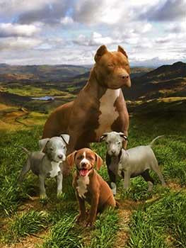 Blanket Queen Signature Select- Pitbull Family