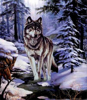 Blanket Queen TOR - Wolf Ct- Sierra Snow Wolf G117