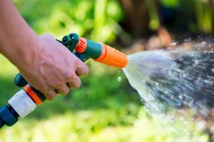 Watering in the summer: How much is too much?
