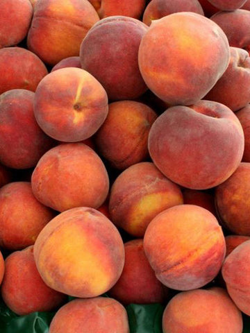 Peach Trees - Gulf Crimson