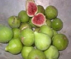 Green Ischia Fig Tree | Fruit Trees