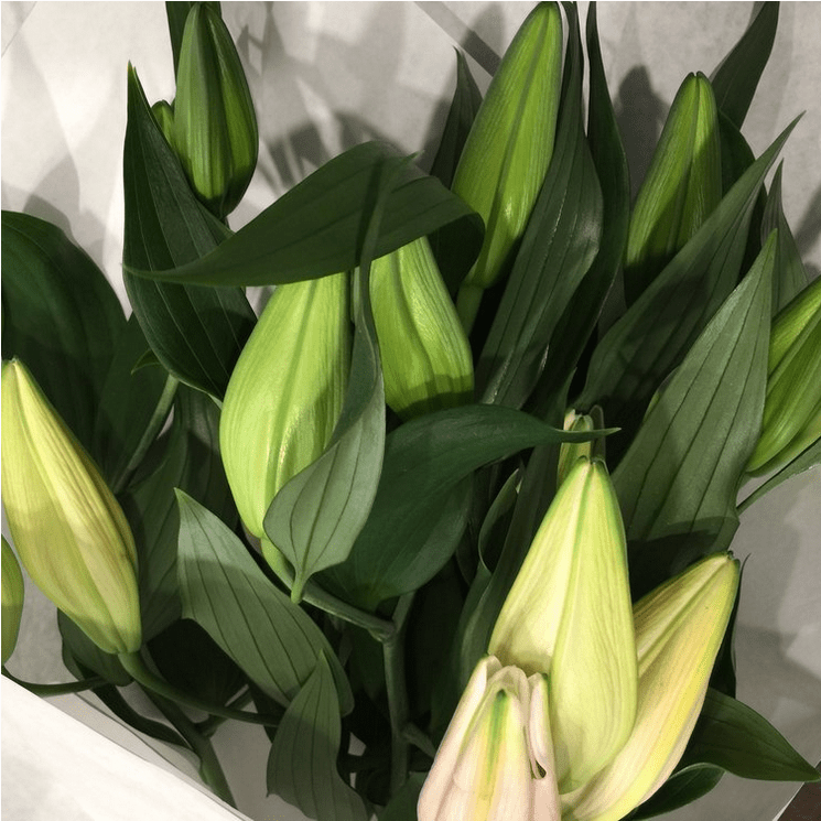 Lillies | Flowers at Kirribilli