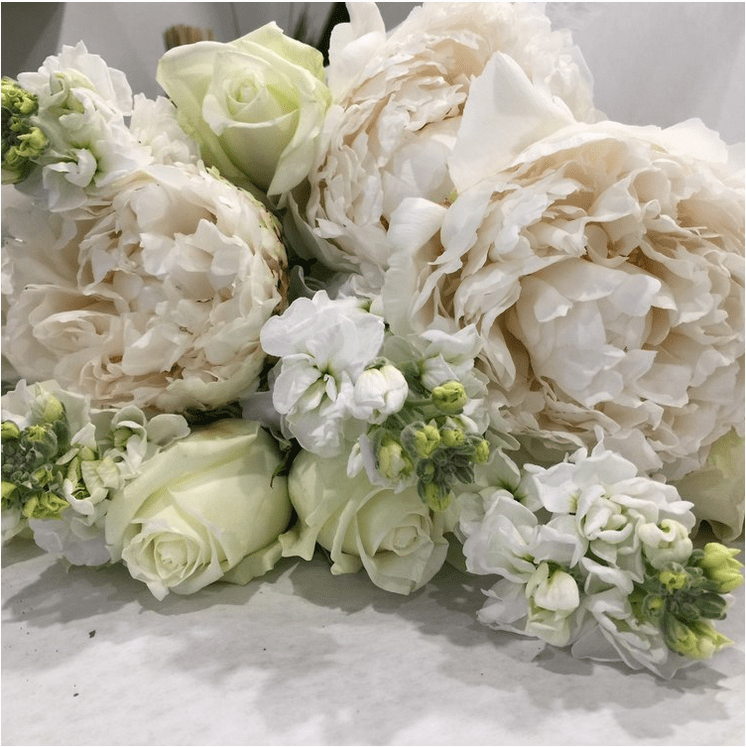 White and Green | Flowers at Kirribilli