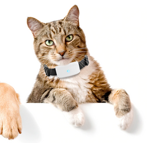 GPS Tracking Pet Collar