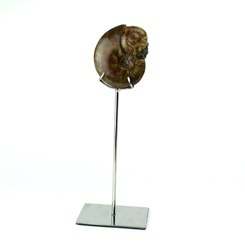Opalized Red Carved Skull Ammonite on Stand