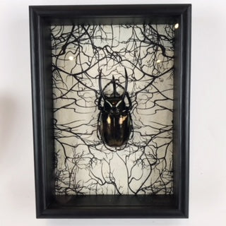 Three Horned Rhino Beetle Shadowbox Diorama 5
