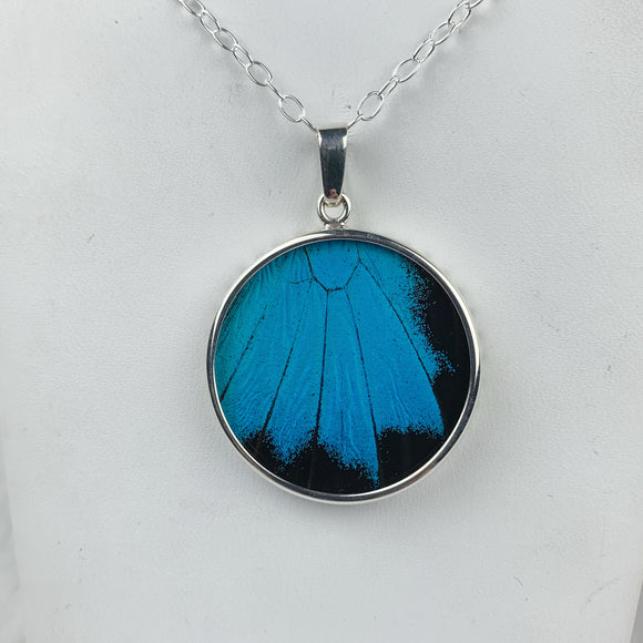 Blue Mountain Swallowtail Butterfly Wing Sterling Necklace
