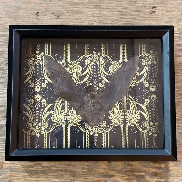 Loved To Death Bat Shadowbox Specimen Gold Filigree Black Background