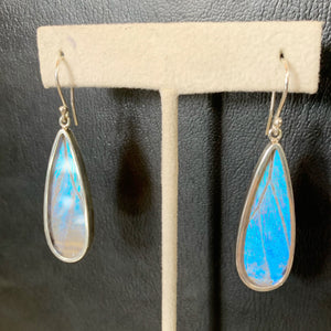 Pearl Morpho Wing Drop Shape Sterling Earrings