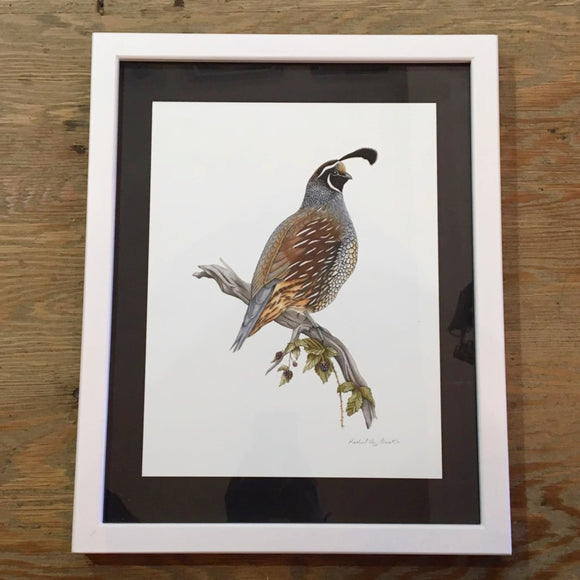 { California Quails } Giclee Print By Rachel Diaz-Bastin