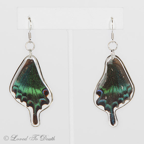 Alpine Black Swallowtail Butterfly In Resin Earrings
