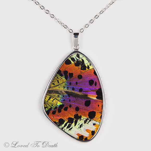 Large Sunset Moth Wing Specimen Sterling Necklace
