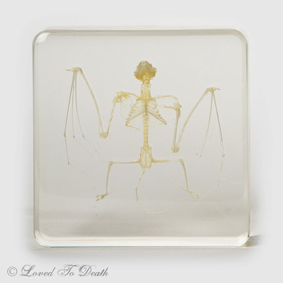 Small Fruit Bat Skeleton In Lucite