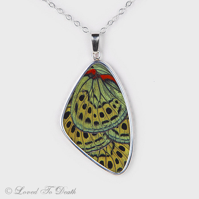 Charles Darwin Butterfly Wings Double Sided Sterling Necklace