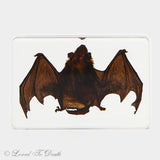 Small Bat Specimen in Lucite