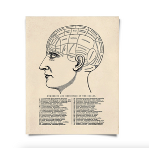 Phrenology Head Antique Repro Print