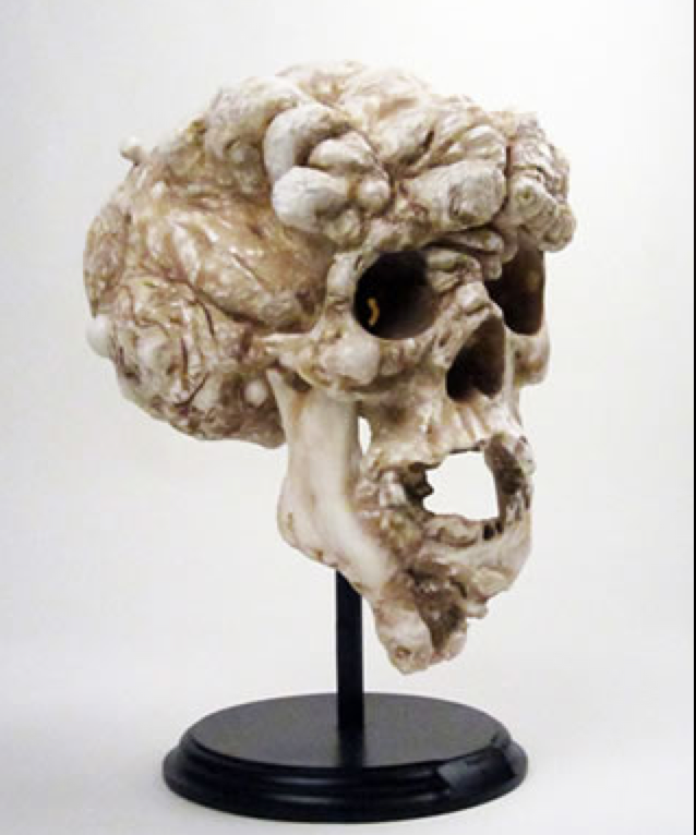 Proteus Sculpted Elephant Man Skull