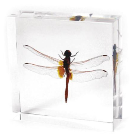 Dragonfly In Lucite